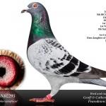 2012: 1st WS, 5th BICC International Bordeaux/Agen. 1st CS, 9th National BBC Bordeaux